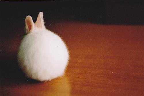 Кролик расстроен и зол! Кролик обиделся...
